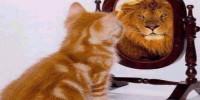 un espejo en el que mirarse